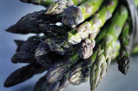 Asparago Verde di Altedo IGP foto-5