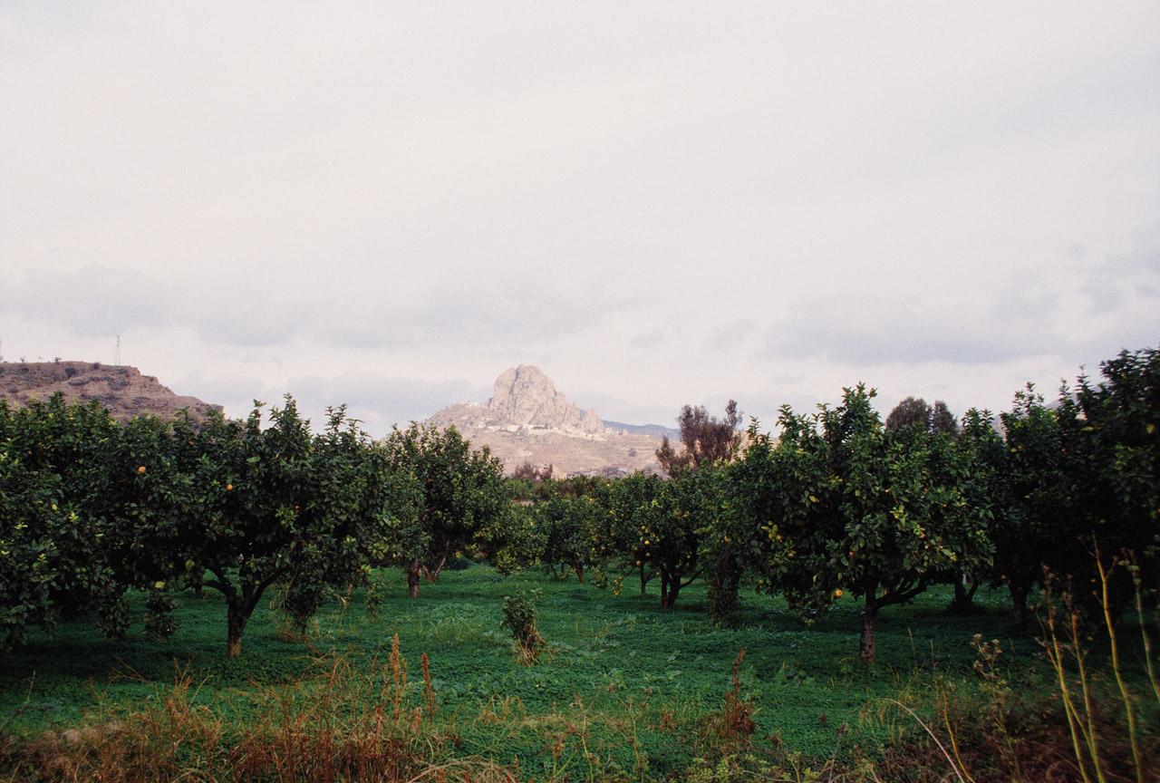 Bergamotto di Reggio Calabria – Olio Essenziale DOP foto-13