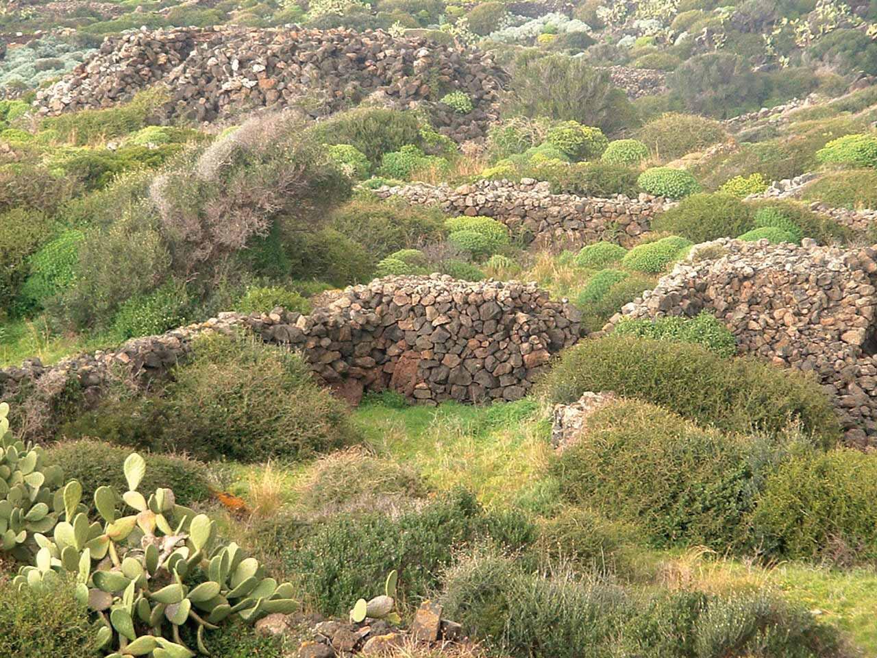Cappero di Pantelleria IGP foto-11