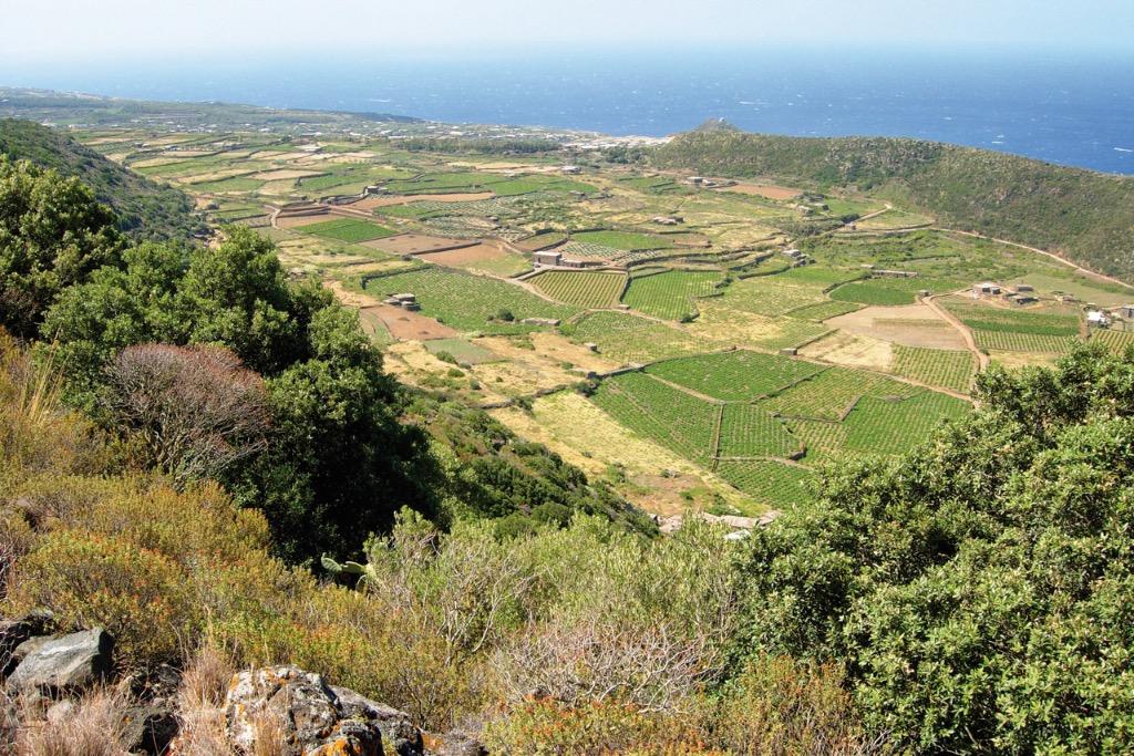 Cappero di Pantelleria IGP foto-12