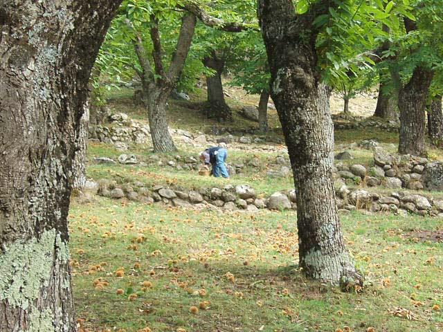 Castagna del Monte Amiata IGP foto-7