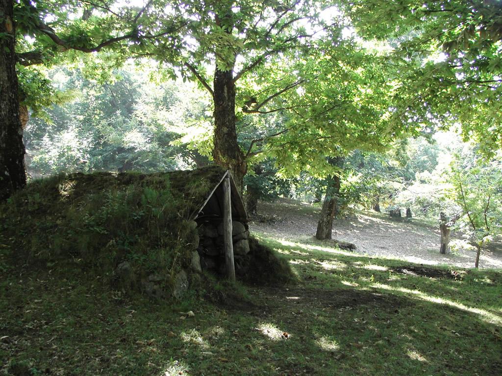 Castagna del Monte Amiata IGP foto-14