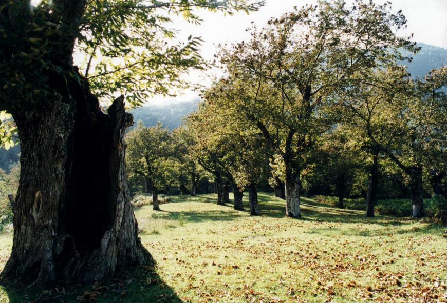 Castagna di Montella IGP foto-10