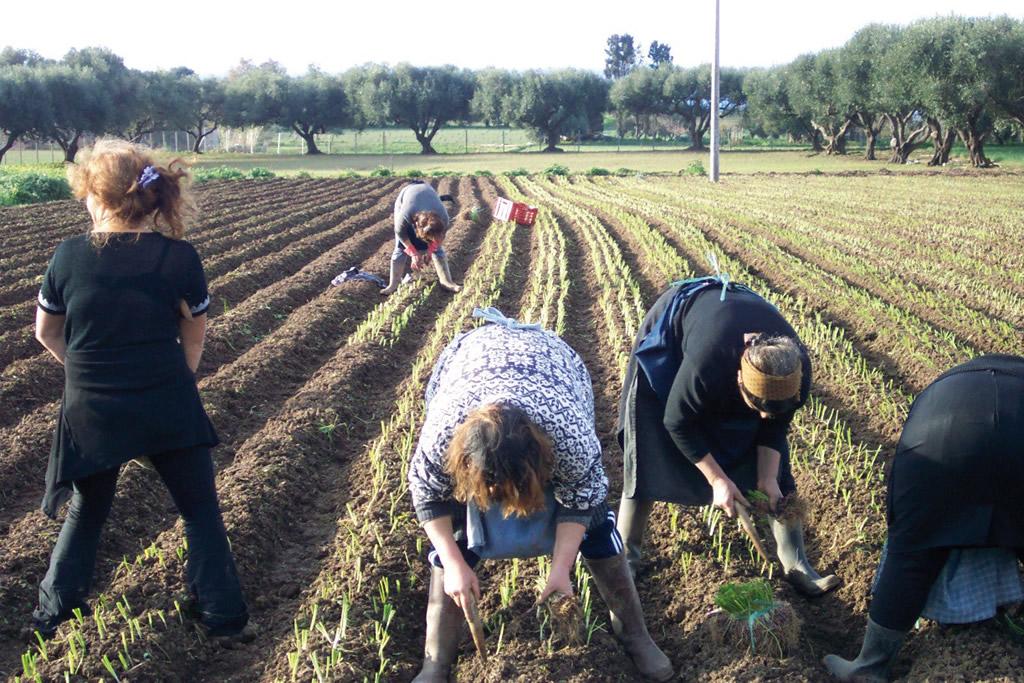 Cipolla Rossa di Tropea Calabria IGP foto-13