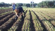 Findus lancia il minestrone 100% italiano con DOP e IGP