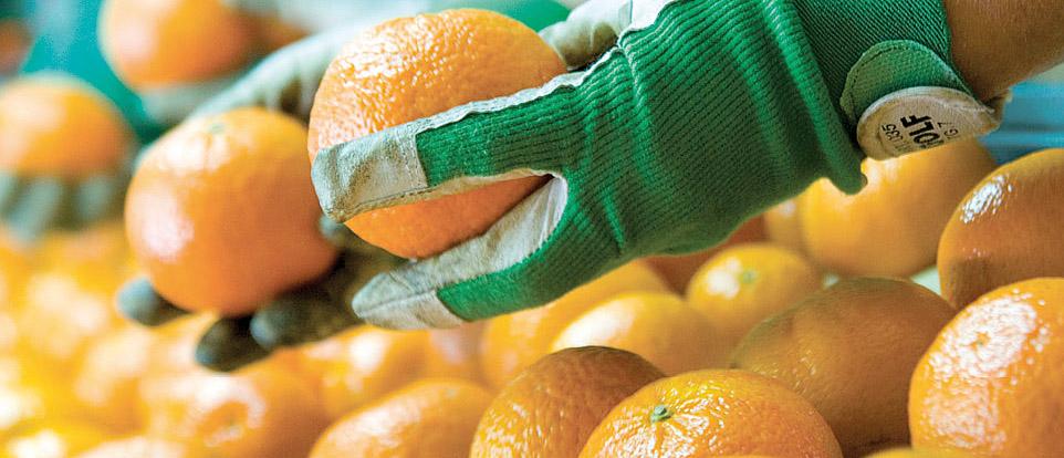 Clementine di Calabria IGP foto-8