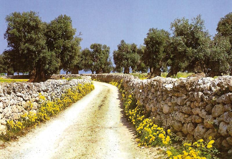 Collina di Brindisi DOP – Olio EVO foto-2