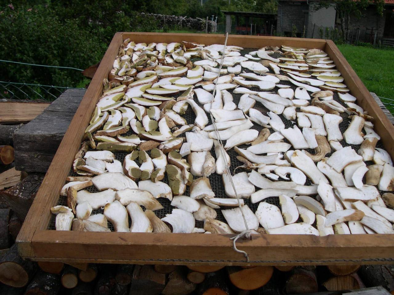 Fungo di Borgotaro IGP foto-13