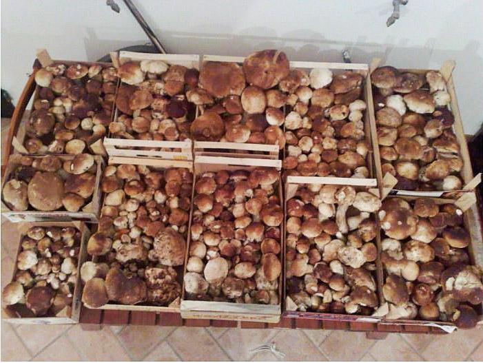 Fungo di Borgotaro IGP foto-10