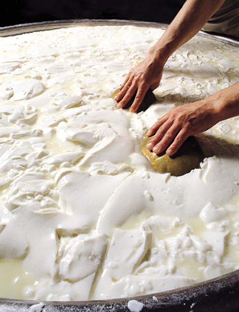 Gorgonzola DOP foto-11