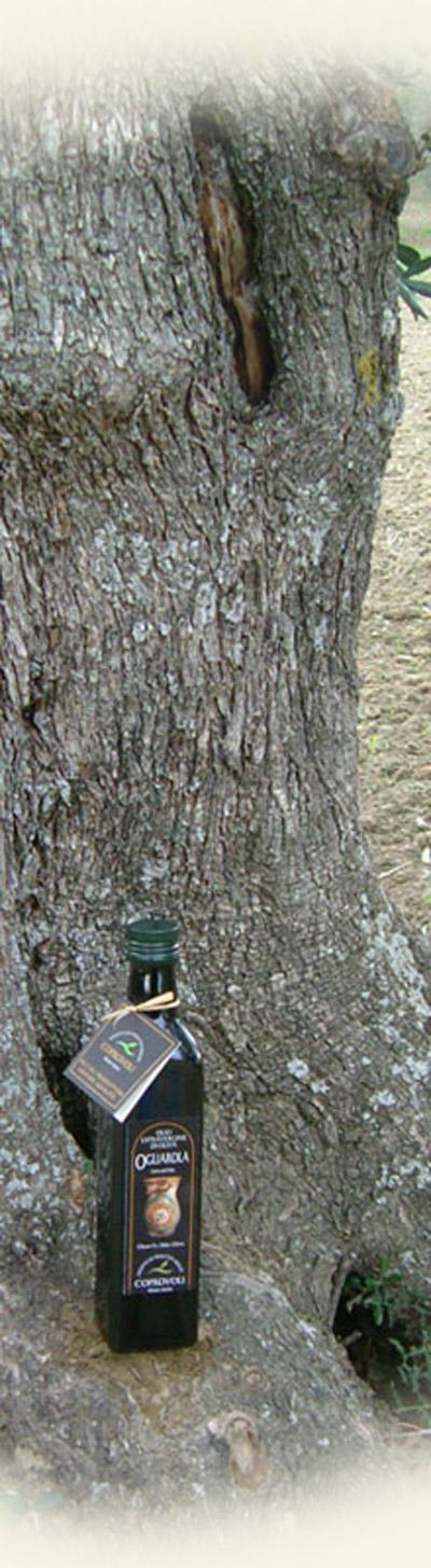 Irpinia – Colline dell'Ufita DOP – Olio EVO foto-14