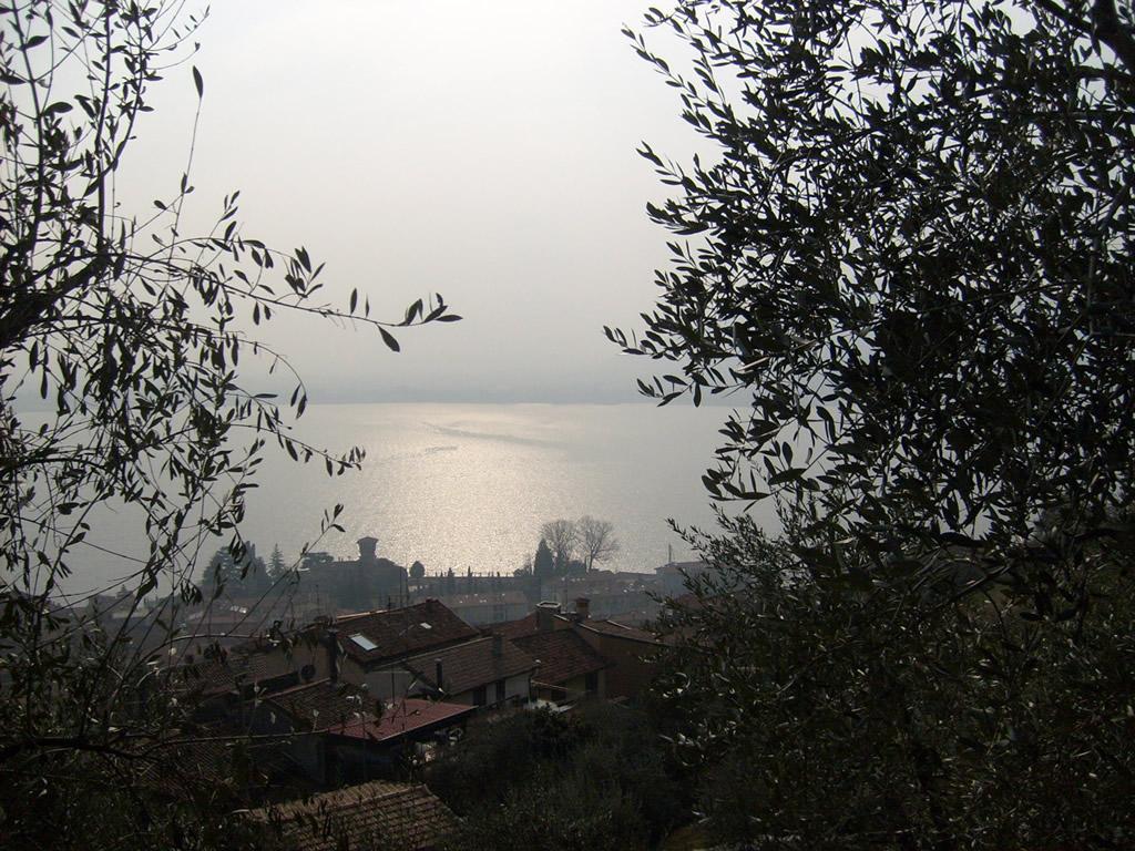 Laghi Lombardi DOP – Olio EVO foto-4