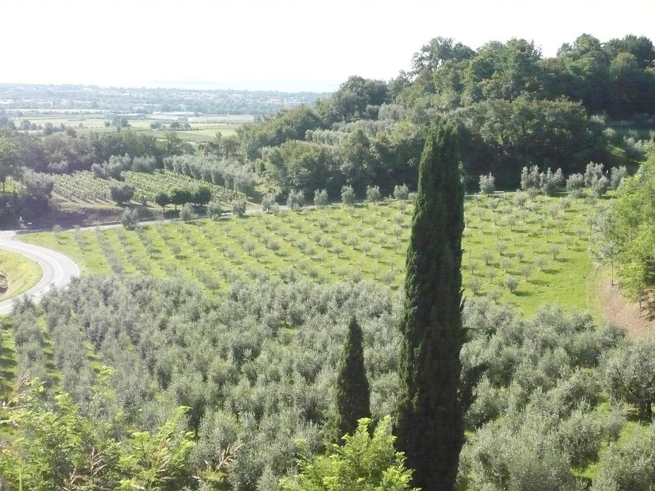 Laghi Lombardi DOP – Olio EVO foto-5