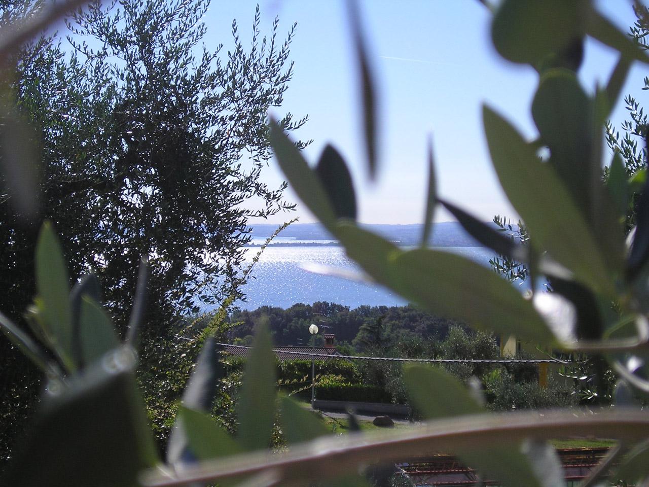 Laghi Lombardi DOP – Olio EVO foto-8