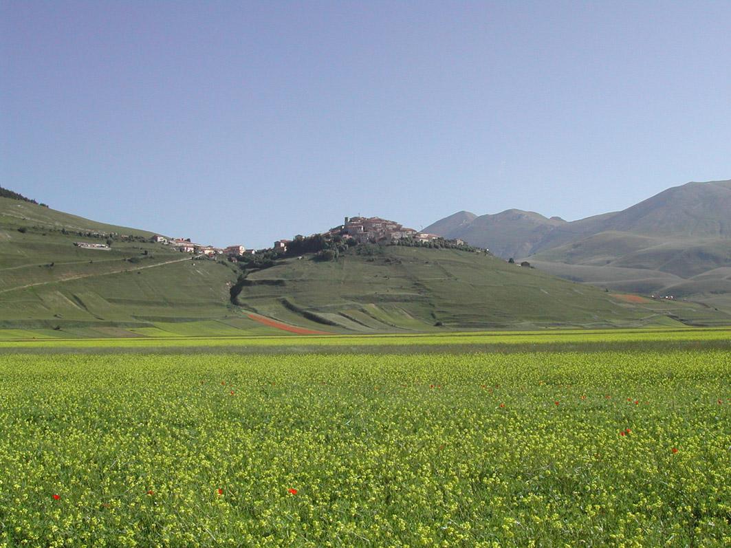 Lenticchia di Castelluccio di Norcia IGP foto-13
