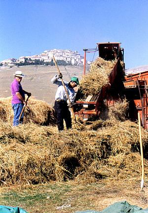 Lenticchia di Castelluccio di Norcia IGP foto-4