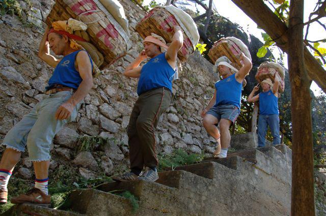 Limone Costa d'Amalfi IGP foto-10