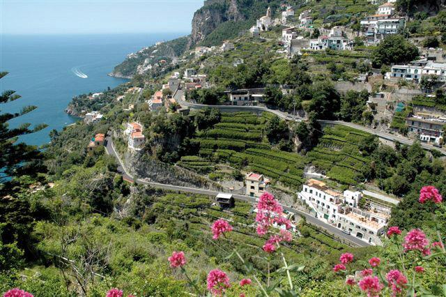 Limone Costa d'Amalfi IGP foto-16