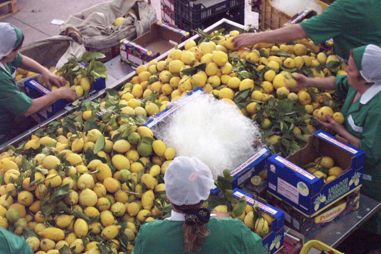 Limone Costa d'Amalfi IGP foto-14