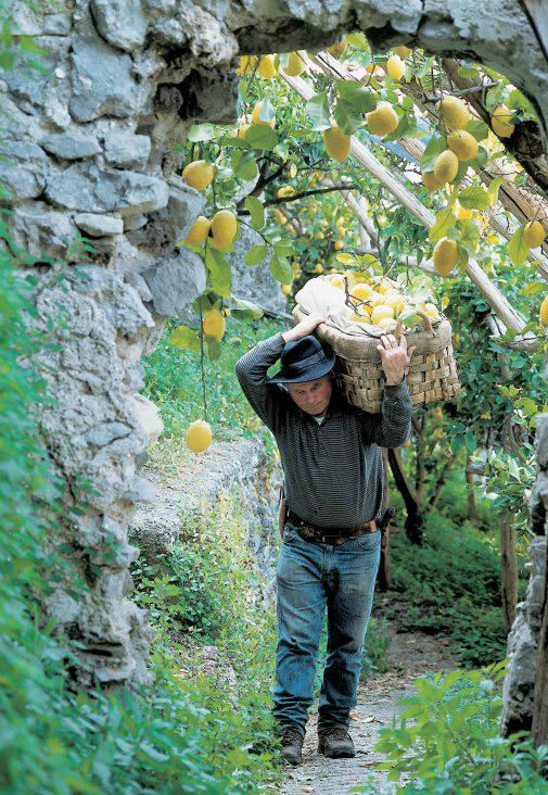 Limone Costa d'Amalfi IGP foto-11