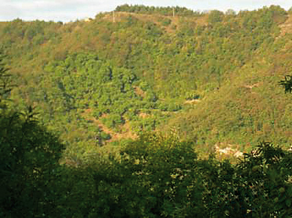 Marrone di Castel del Rio IGP foto-7