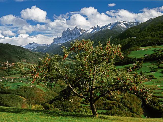 Mela Alto Adige IGP foto-2