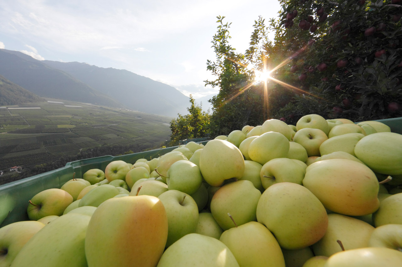 Mela Alto Adige IGP foto-6
