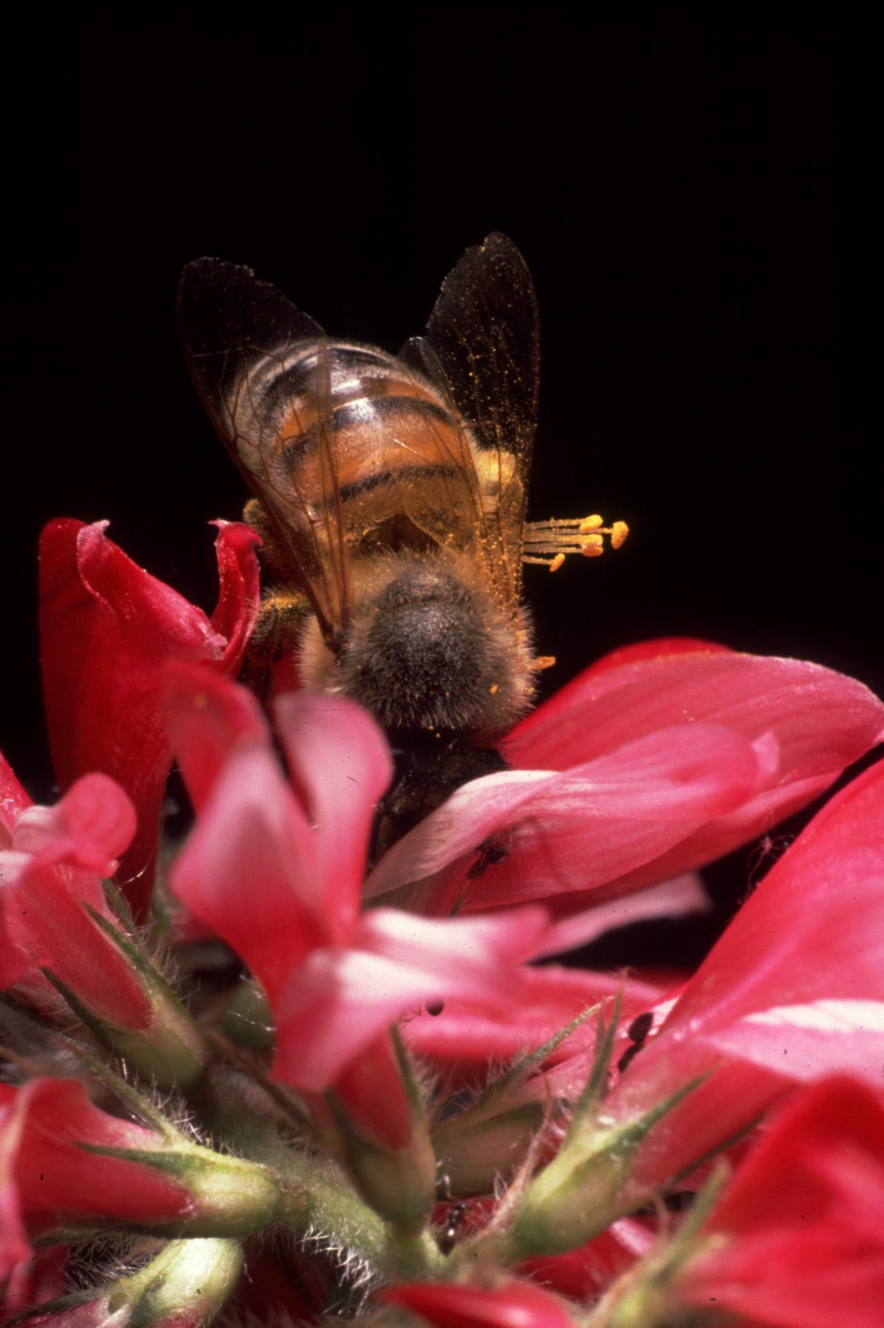 Miele della Lunigiana DOP foto-10