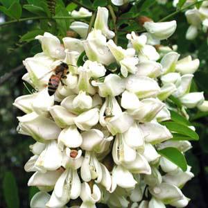 Miele della Lunigiana DOP foto-11