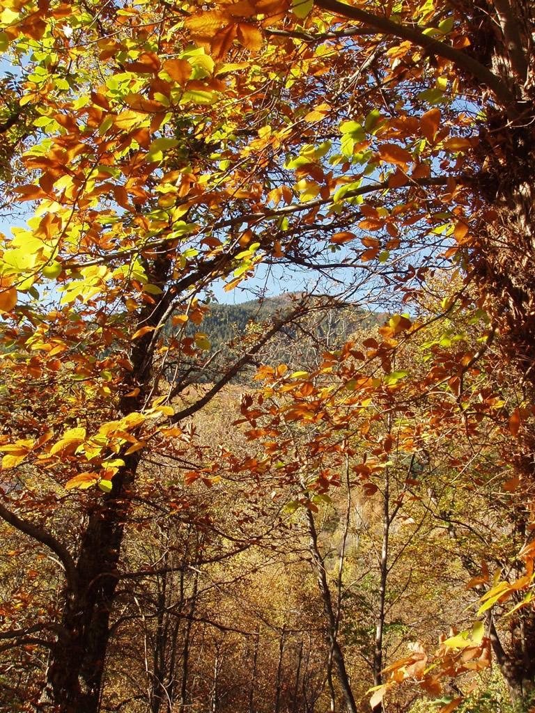 Miele della Lunigiana DOP foto-13
