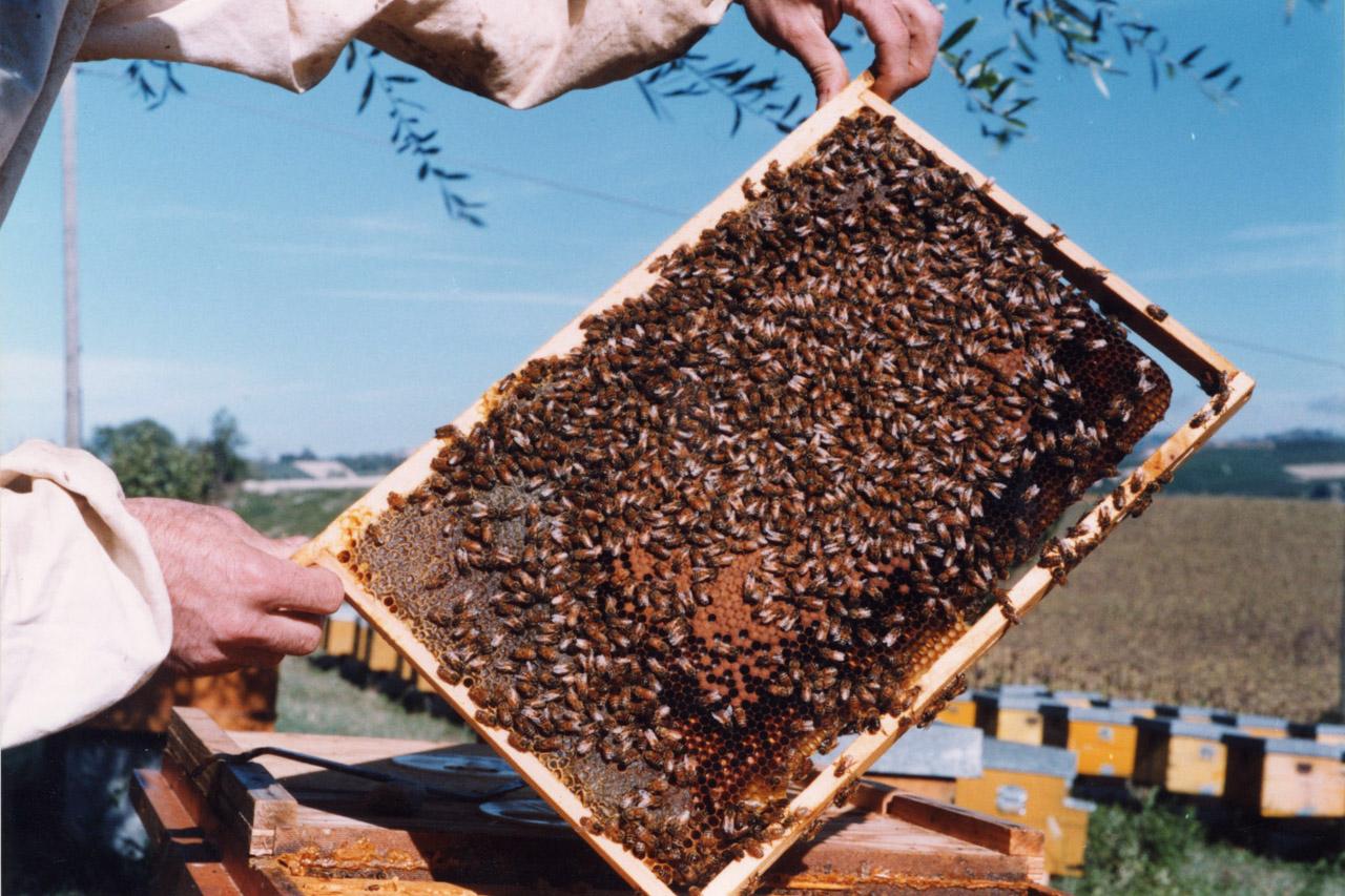 Miele della Lunigiana DOP foto-17