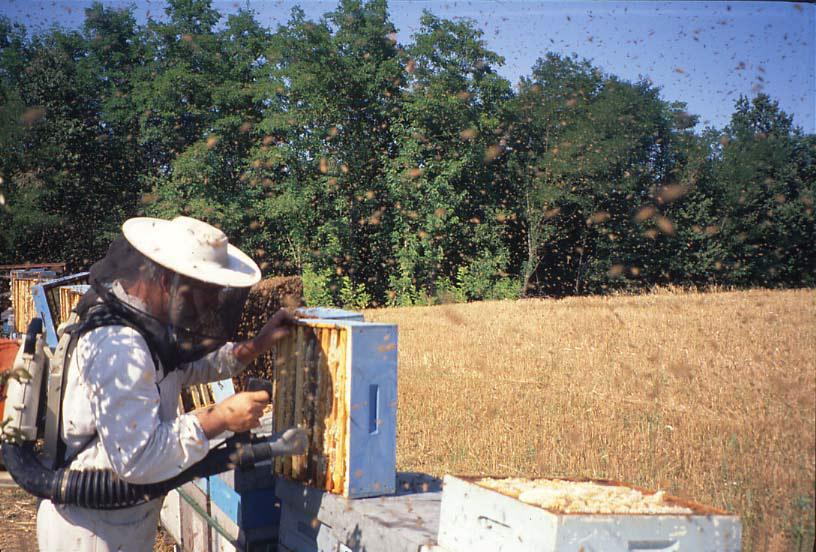 Miele della Lunigiana DOP foto-21