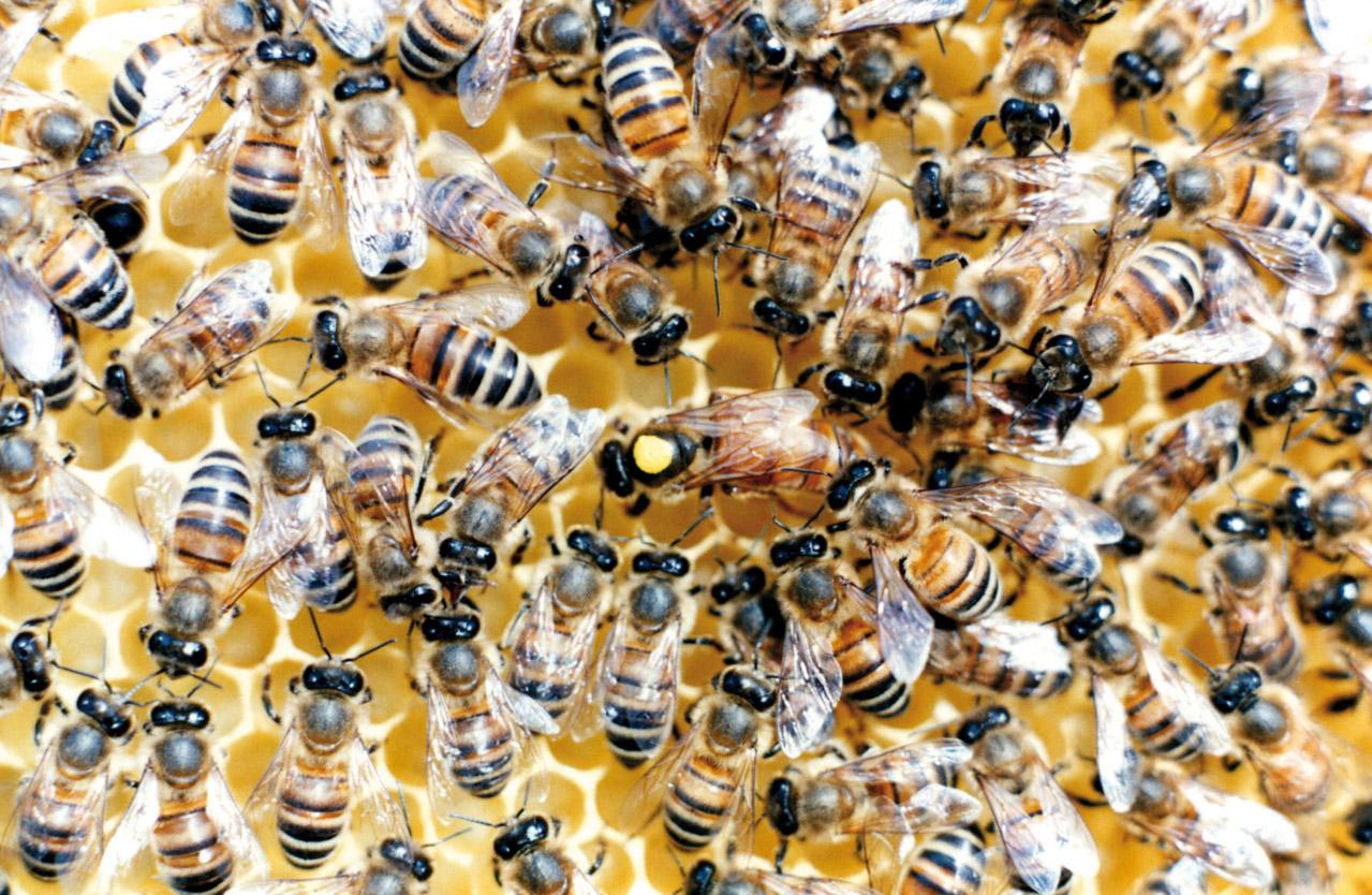 Miele della Lunigiana DOP foto-7