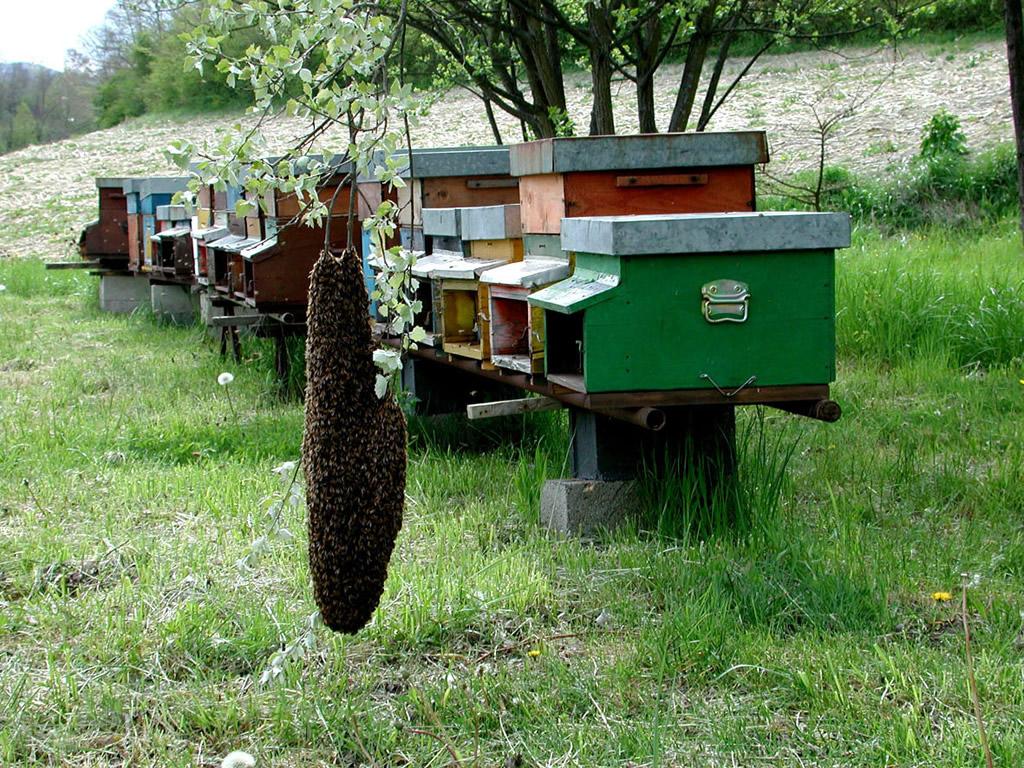 Miele della Lunigiana DOP foto-22