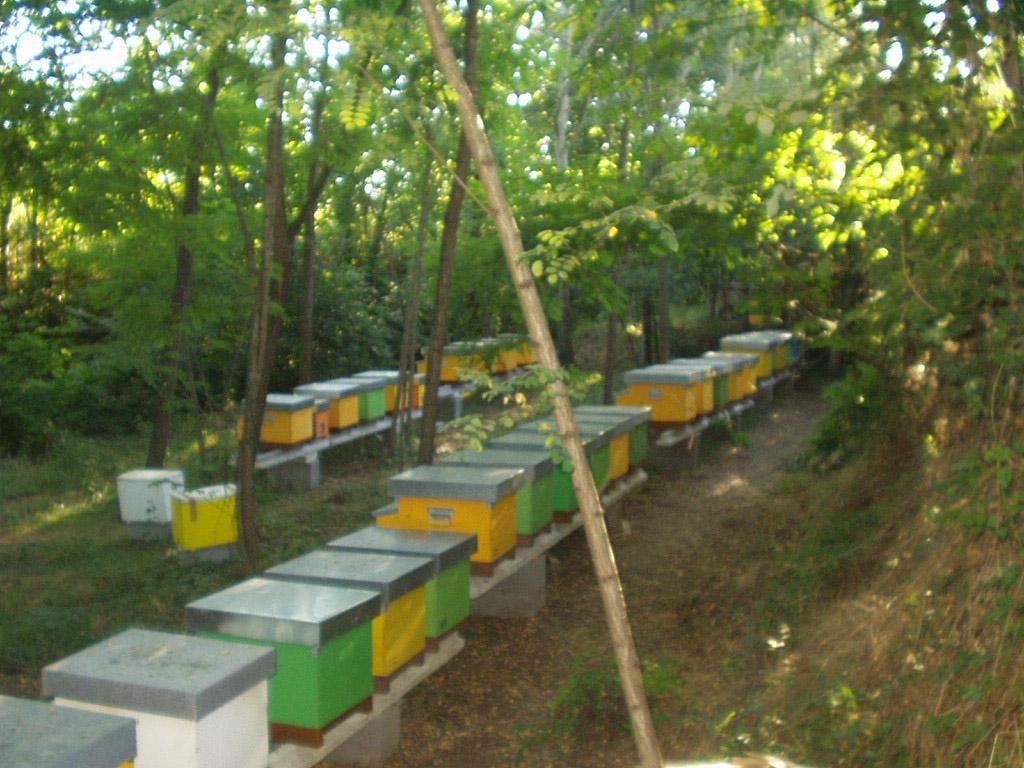 Miele della Lunigiana DOP foto-23