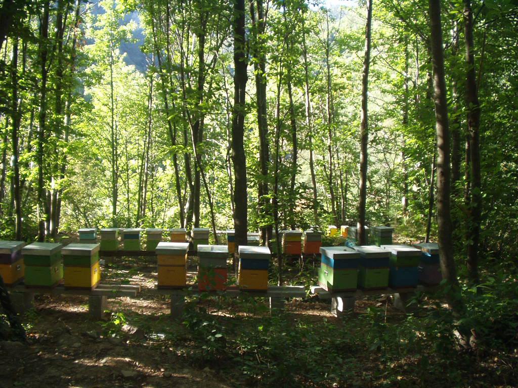 Miele della Lunigiana DOP foto-24
