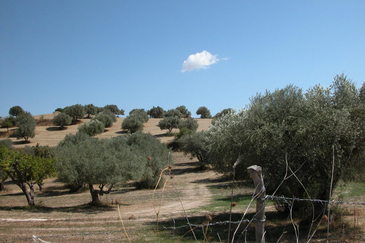 Monti Iblei DOP – Olio EVO foto-4