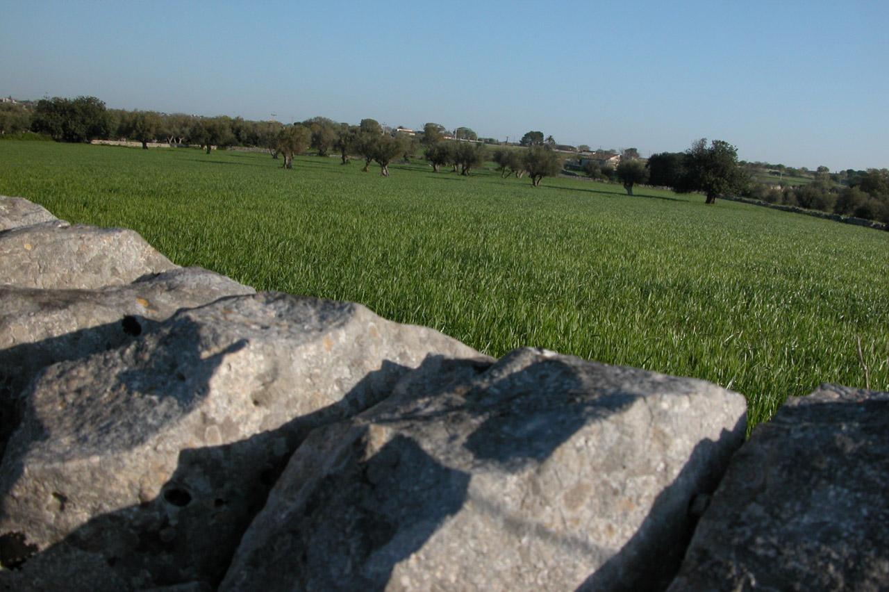 Monti Iblei DOP – Olio EVO foto-8