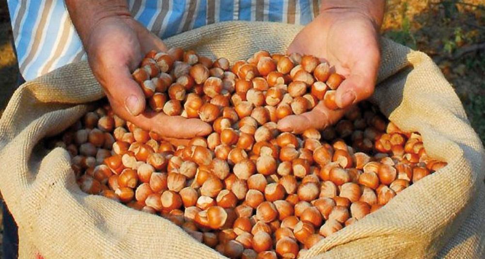 Nocciola del Piemonte IGP foto-2