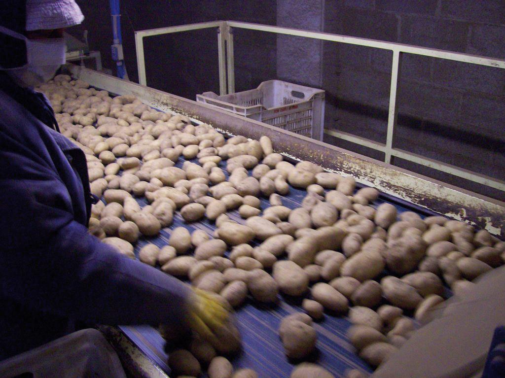 Patata della Sila IGP foto-14