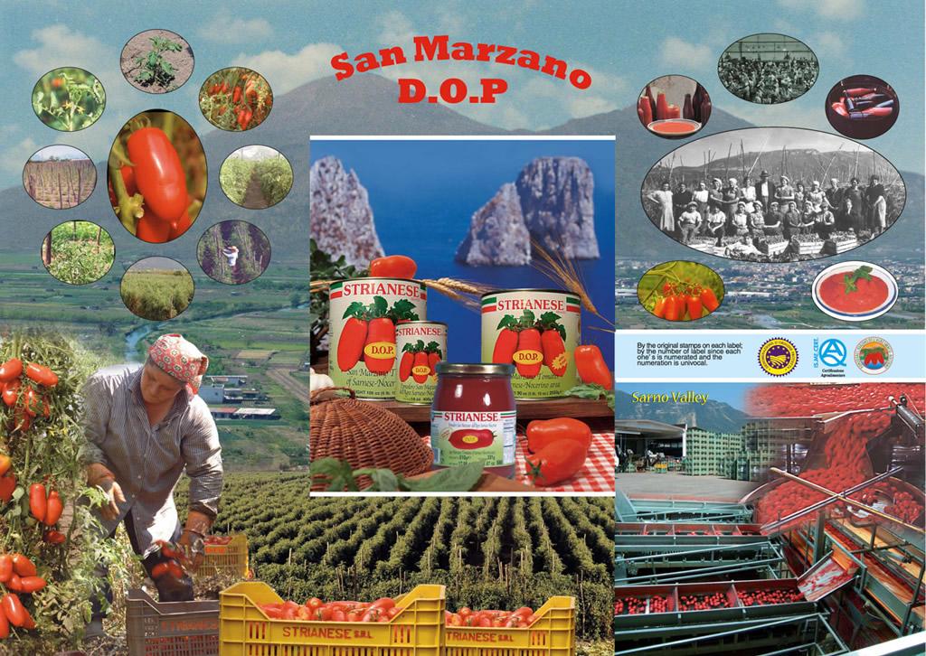 Pomodoro San Marzano dell'Agro Sarnese-Nocerino DOP foto-8