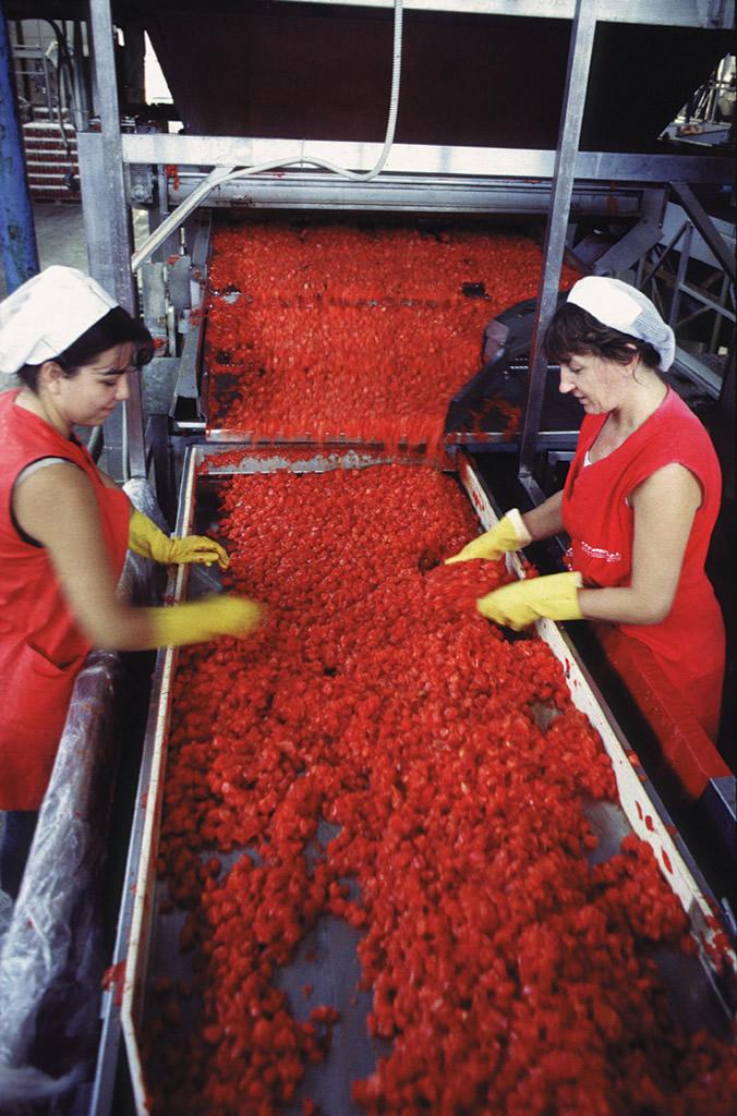 Pomodoro San Marzano dell'Agro Sarnese-Nocerino DOP foto-4