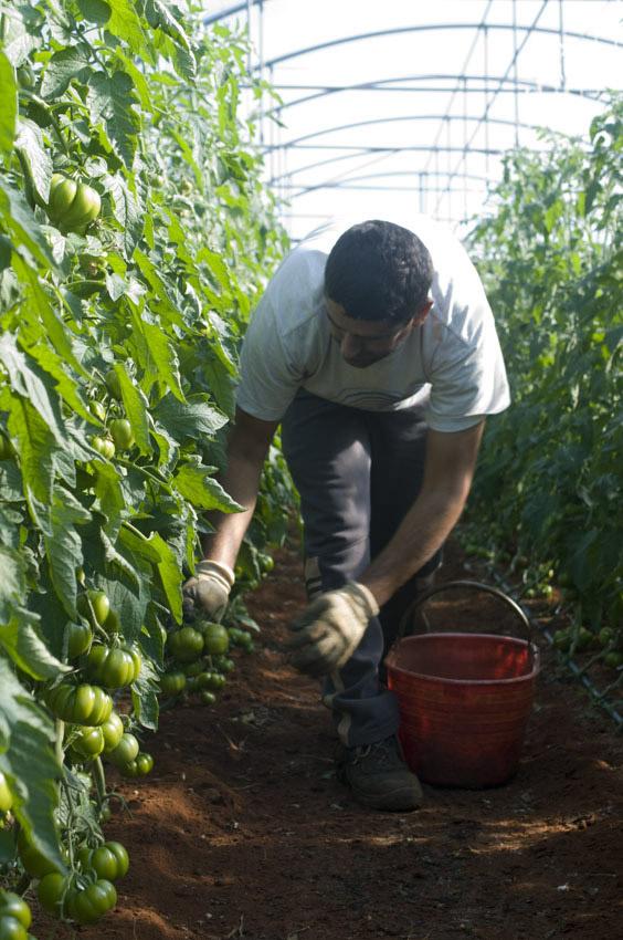 Pomodoro di Pachino IGP foto-11