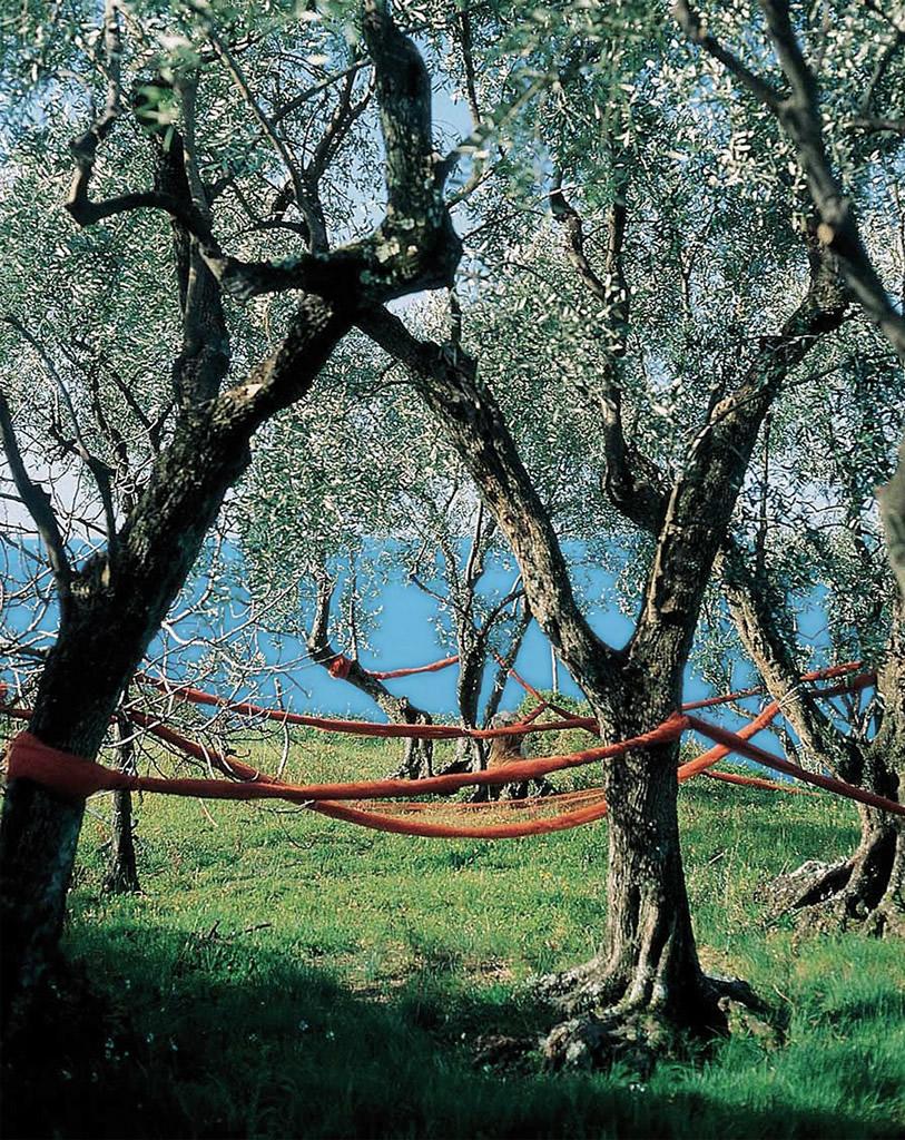 Riviera Ligure DOP – Olio EVO foto-4