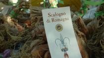 Scalogno di Romagna IGP:Glenda Vignoli presidente del nuovo Consorzio