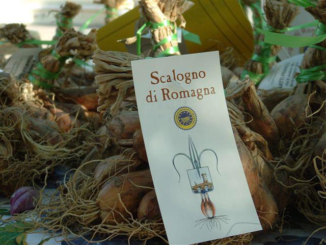 Scalogno di Romagna IGP foto-17