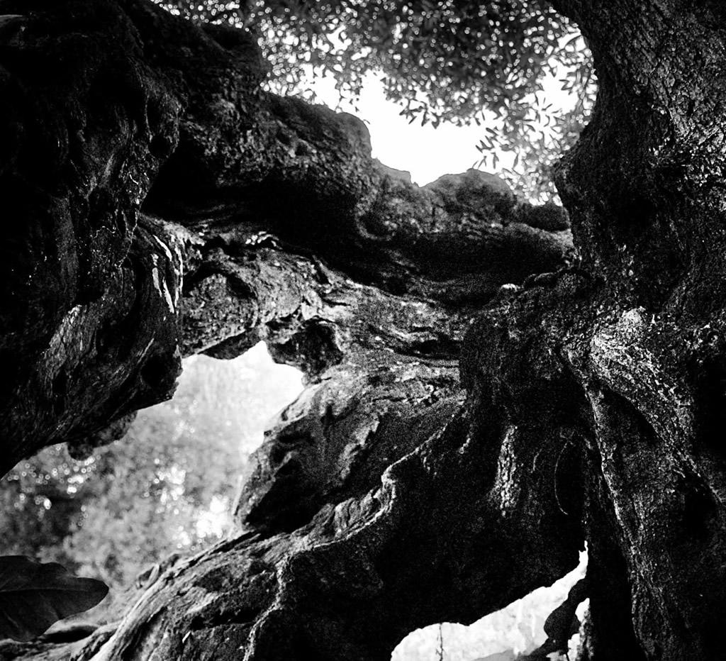 Terra d'Otranto DOP – Olio EVO foto-10