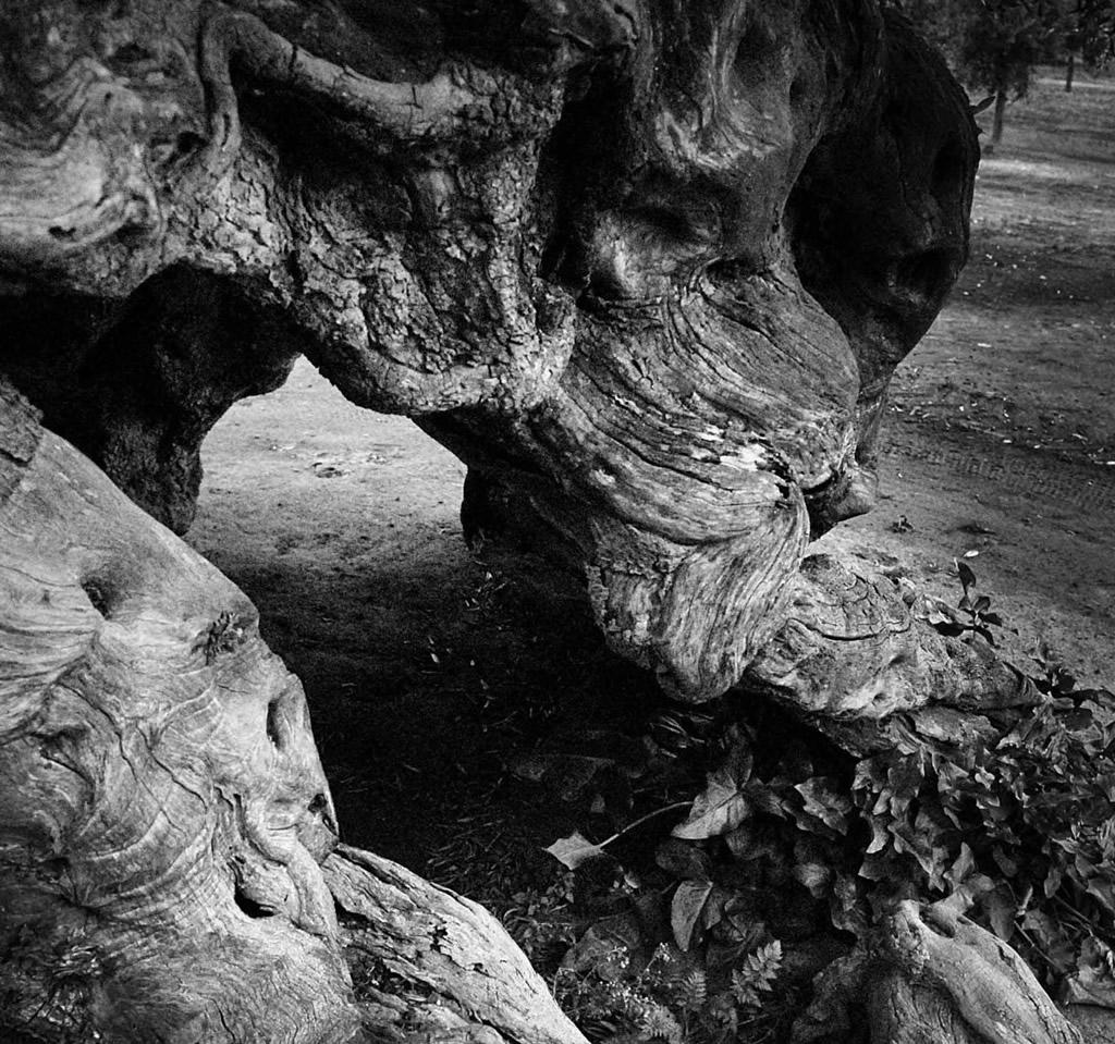 Terra d'Otranto DOP – Olio EVO foto-11