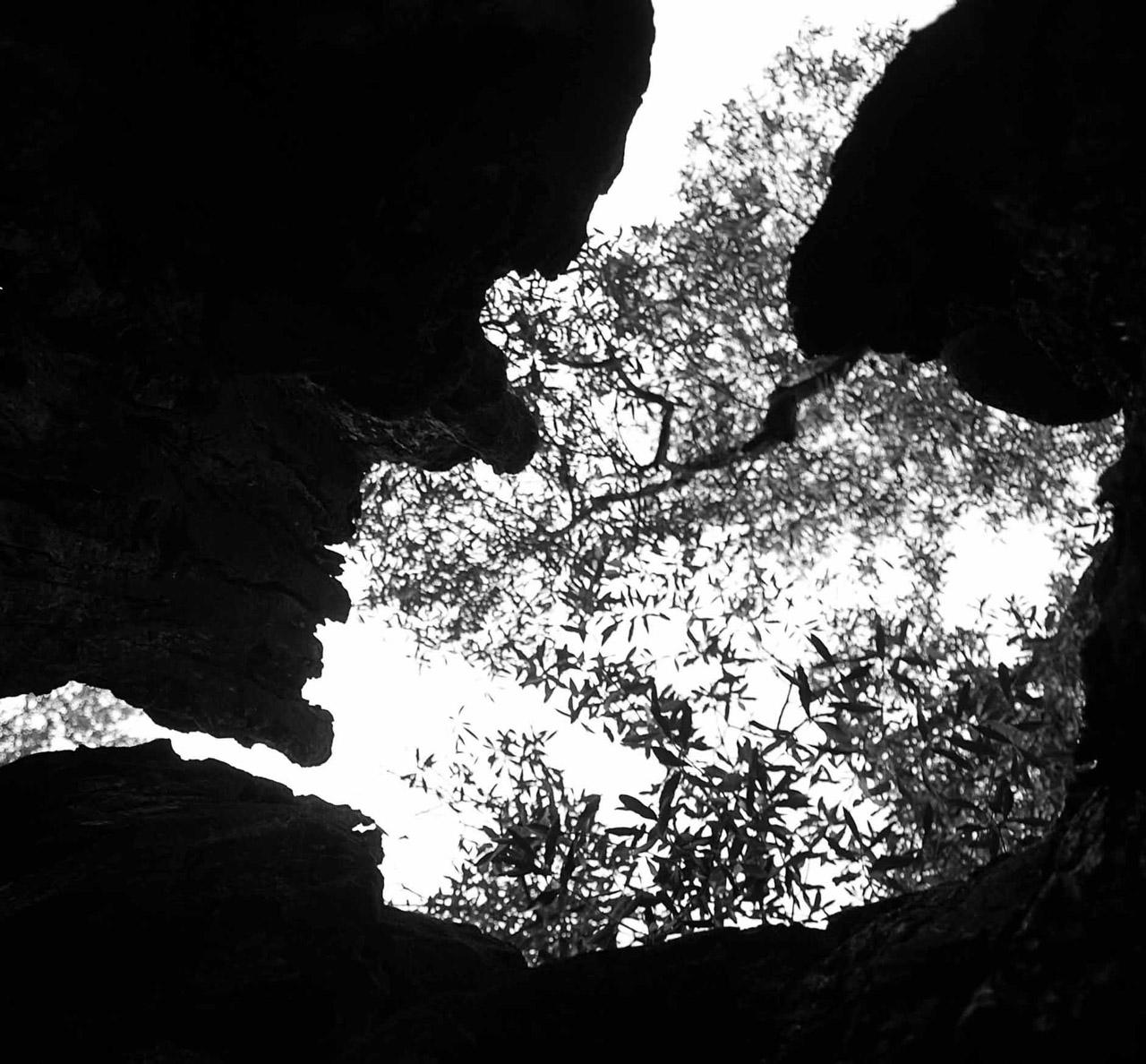 Terra d'Otranto DOP – Olio EVO foto-12
