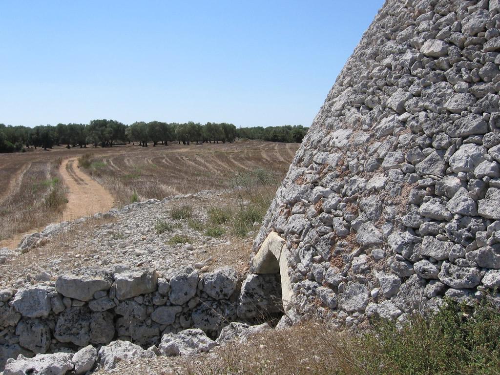 Terra d'Otranto DOP – Olio EVO foto-16